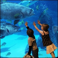 If you're looking for discount tickets to the Georgia Aquarium, you're in luck. You've got a few ways to get in free or on the cheap, no coupon code required. The deals: It's back: On Mondays-Thursdays through October 25, , you can take advantage of the Me & Mommy deal at the Georgia Aquarium. For $, you'll receive admission for one adult & up to four children age 5 & under.