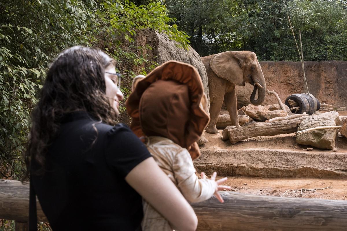 "A child dresses up to enjoy ""Boo at the Zoo"". Photo courtesy of Zoo Atlanta."