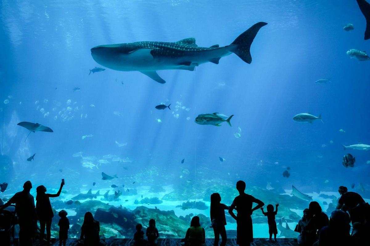 The Georgia Aquarium is open daily.