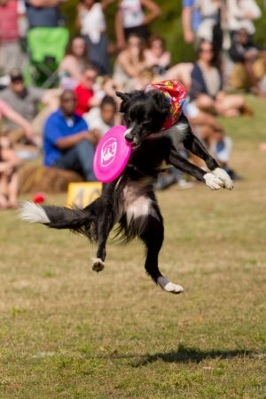 The Atlanta Dogwood Festival is April 13-15.