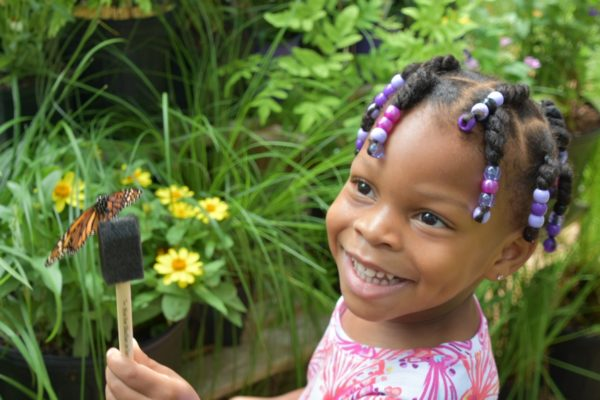 Chattahoochee Nature Center's annual Flying Colors Butterfly Festival is June 2 and 3.