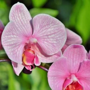 Orchid Market